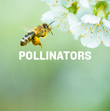 Pollinators. Learn more.