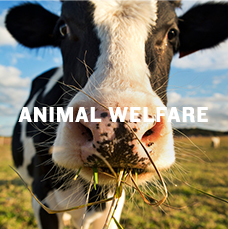 Animal welfare. Learn more.