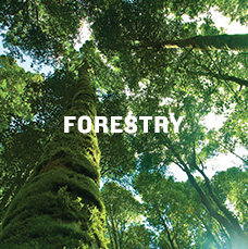 Forestry. Learn more.