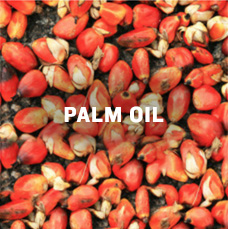 Palm oil. Learn more.